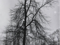 Untitled (trees in a park, winter, version 1)