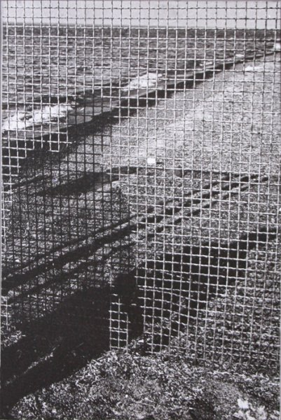 Untitled (Shadow on a fence)