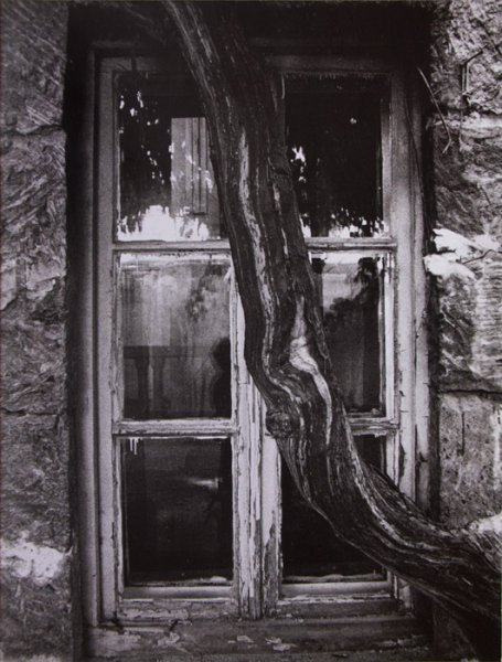 Untitled (tree in front of a window)
