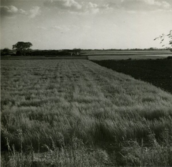 Untitled (field)