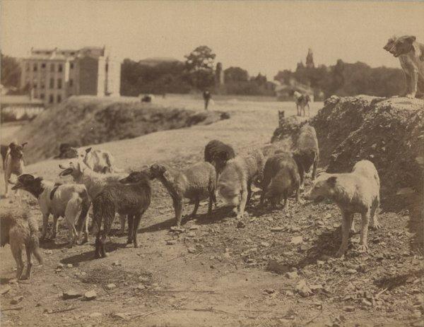Les chiens du Constantinople